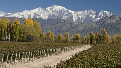La Pulpera, avanzando en integración de la producción frutícola- San Rafael